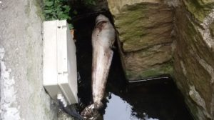 siluro nella fontana