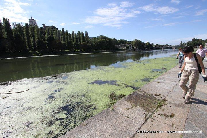 murazzi-e-alghe