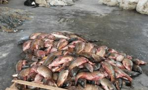 carpe sequestrate. Dal Blog della pesca